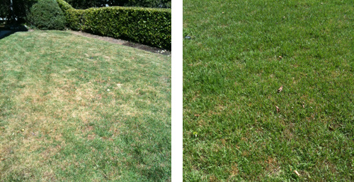 Lawn treated with liquid fertilizer