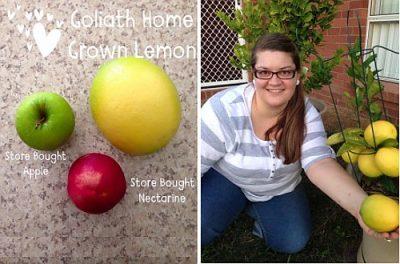 Giant organic lemons