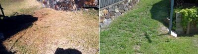Lawn test with liquid fertilizer