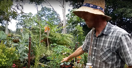Neil Fedderer Everything Good Nursery QLD